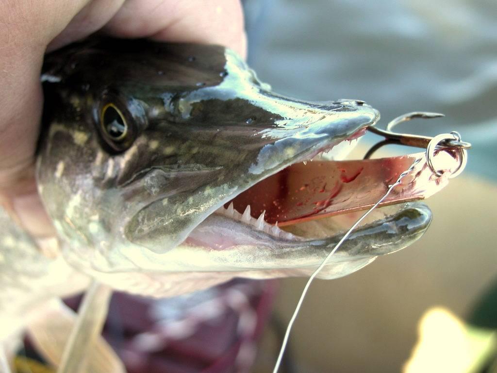 Платные рыбалки в карелии