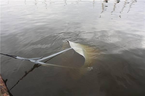 Якорь парашют для лодки