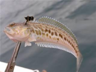 Анапа рыбалка с берега