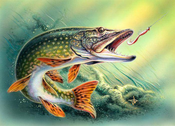Джига рыбалка