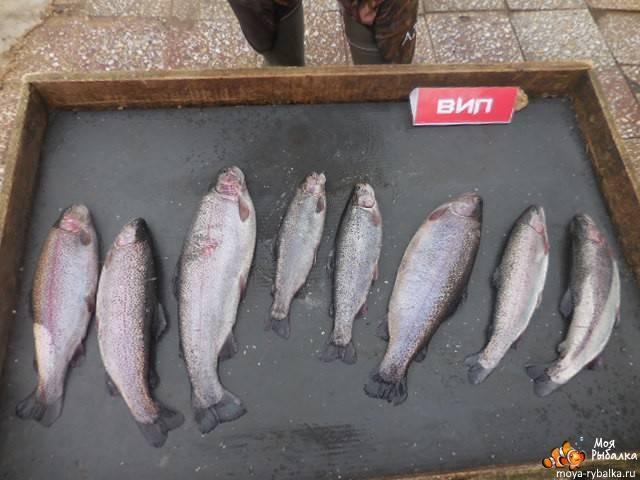 Платная рыбалка в парамоново