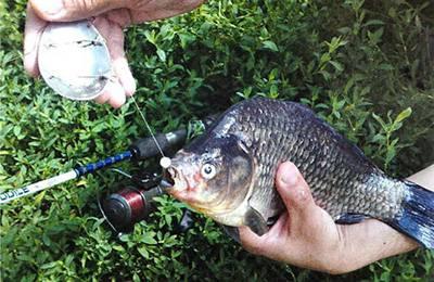 Кормушка для рыб своими руками